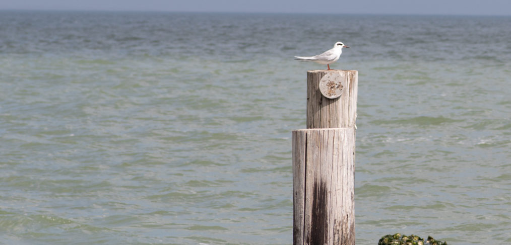 A lone seagull using an old piling perch after a storm and finding a bit of alone time in the sun. I like the solitude and texture of this shot. I photographed this in Port Lavaca like a lot of my seaside shots.